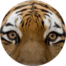 Buy A Zoo Pass Icon