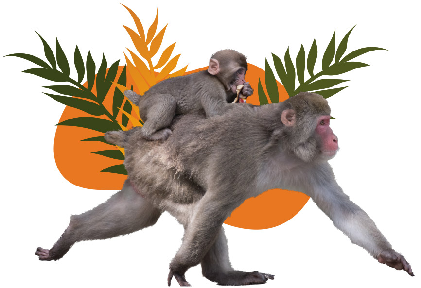 Monkeys Image