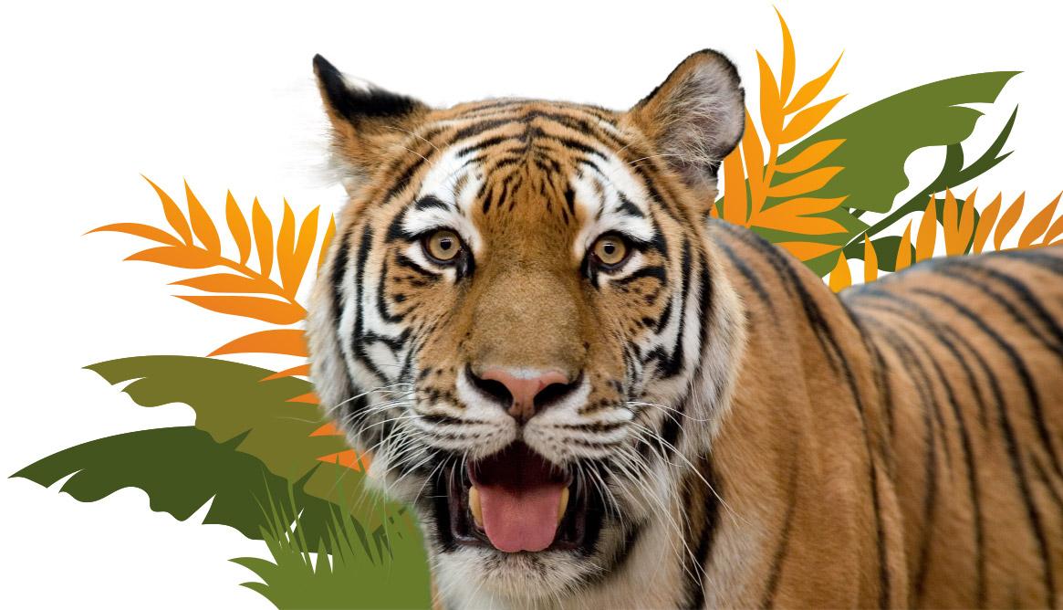 Tiger Zoo Pass Image