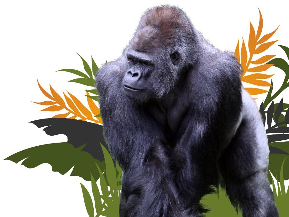 How We Support Intro Gorilla Image