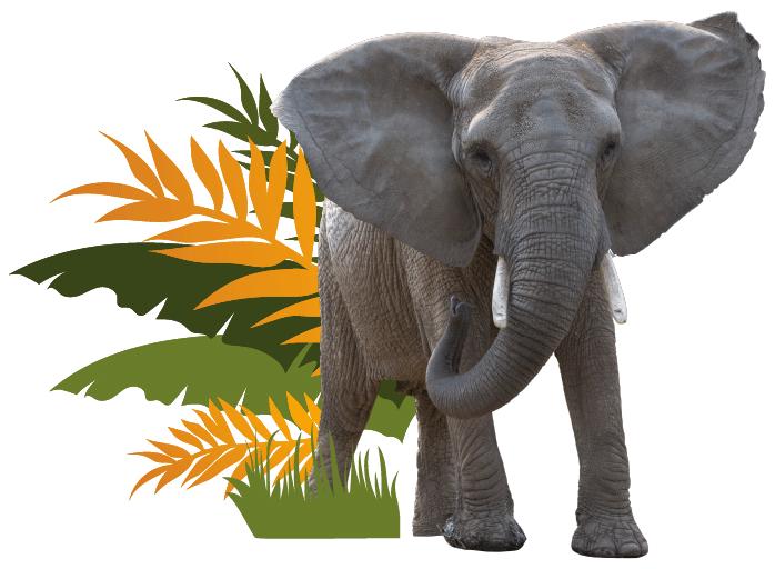 Testimonial Elephant Image