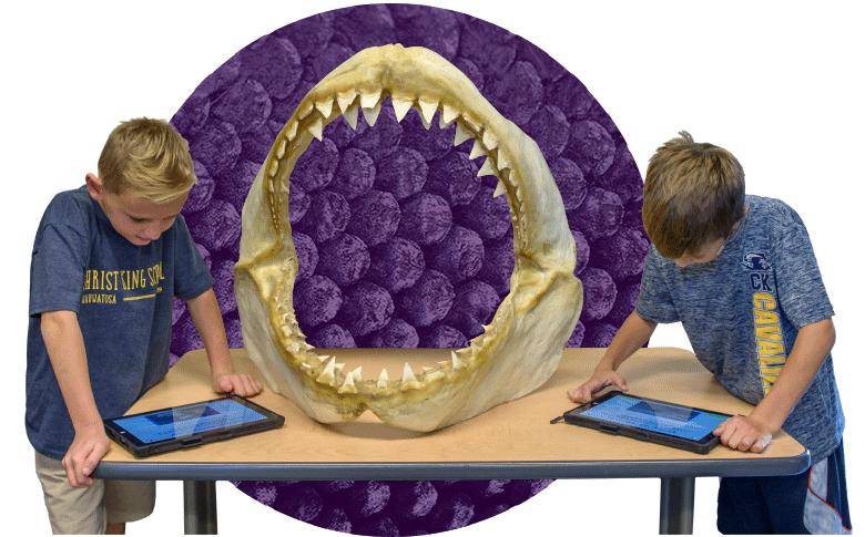 Purple Shark Skull Circle