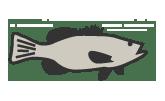 Fish Zoo Cam Icon