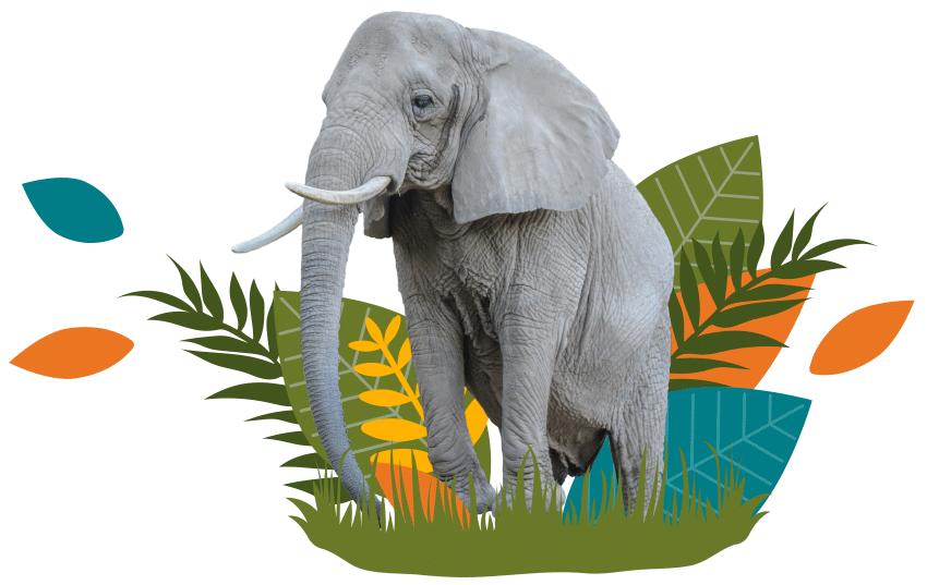 Elephant Decorative Image