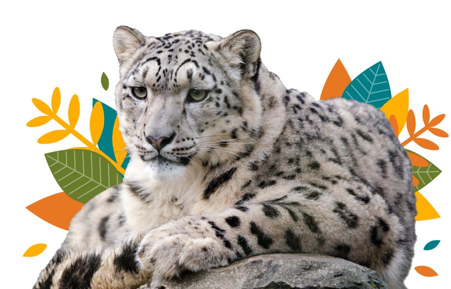Snow Leopard Intro Image