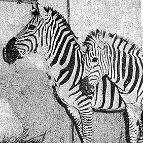 Milwaukee Zoo News Archive Icon