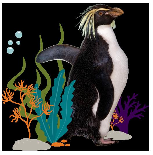 Penguin Testimonial Picture