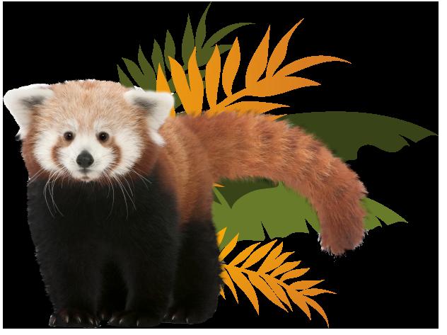 Testimonial Red Panda Image