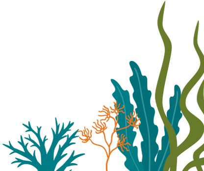 Seaweed Background