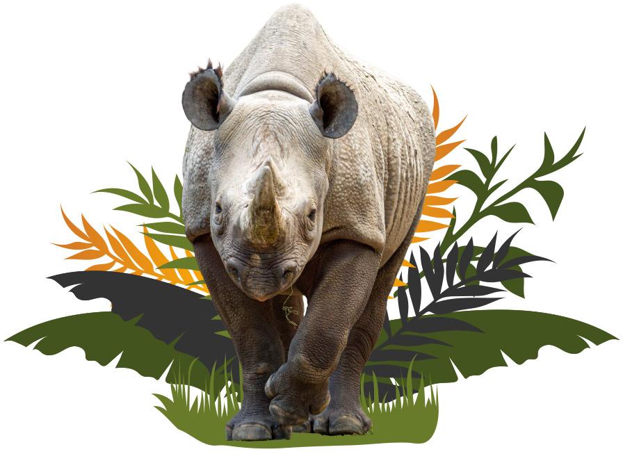 Rhino Image