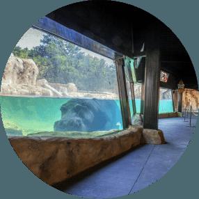 Hippo Habitat