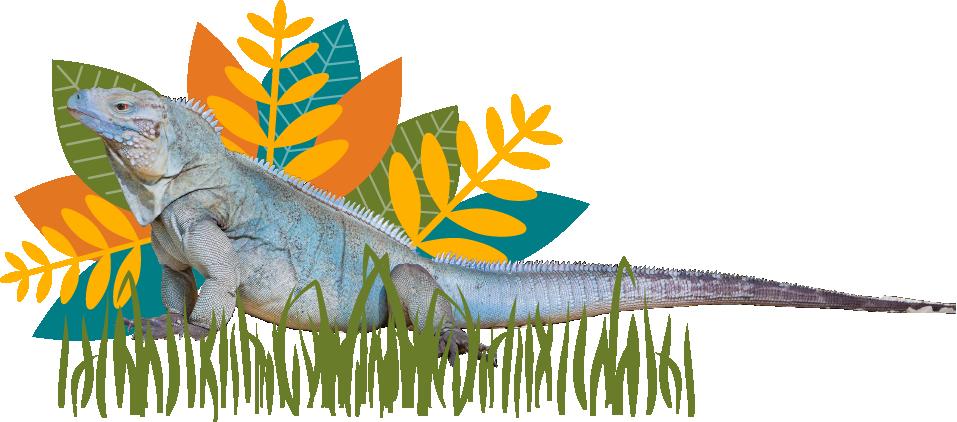 Iguana And Leaves Background