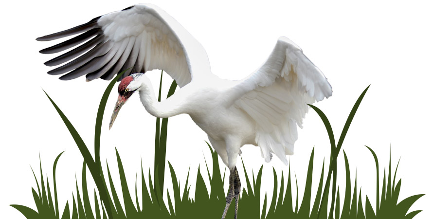 Green Initiatives Swan Image Intro