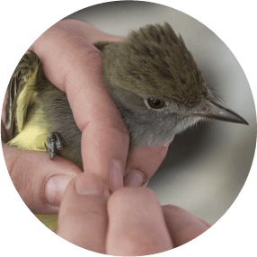 Migrating Birds Icon