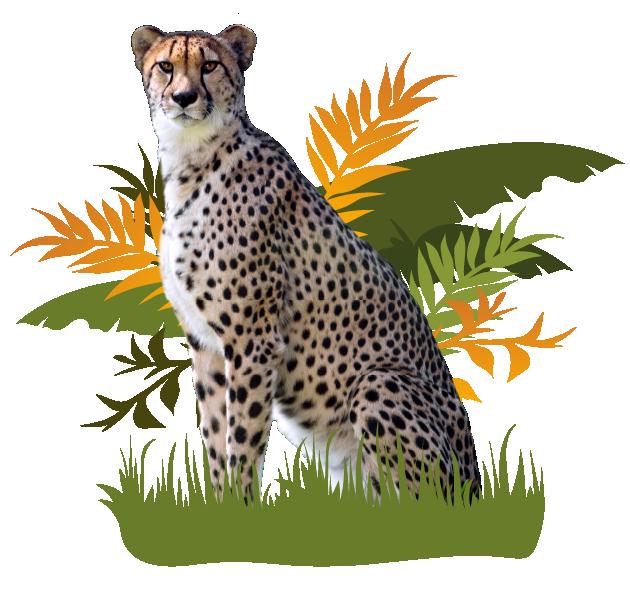 Cheetah Intro Image