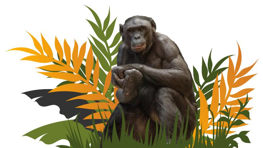 Species Survival Plan Intro