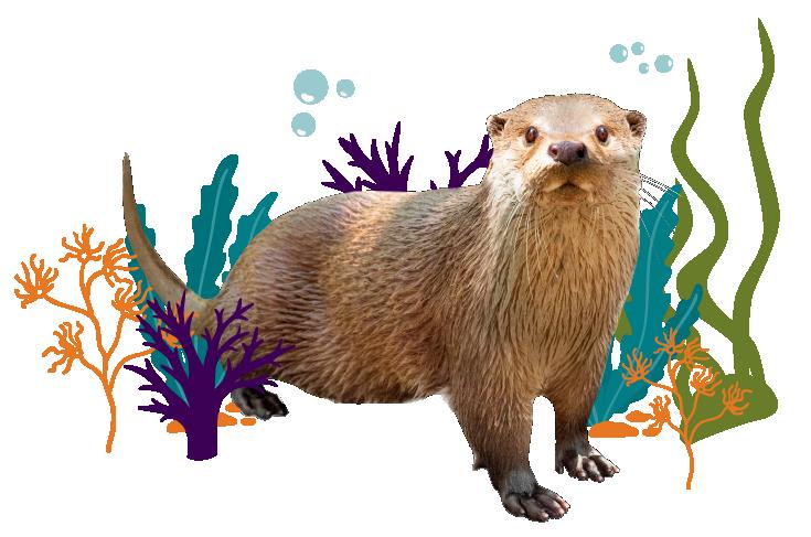River Otter Image