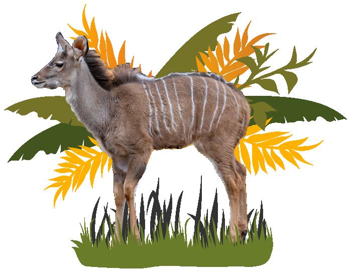Kudu Image