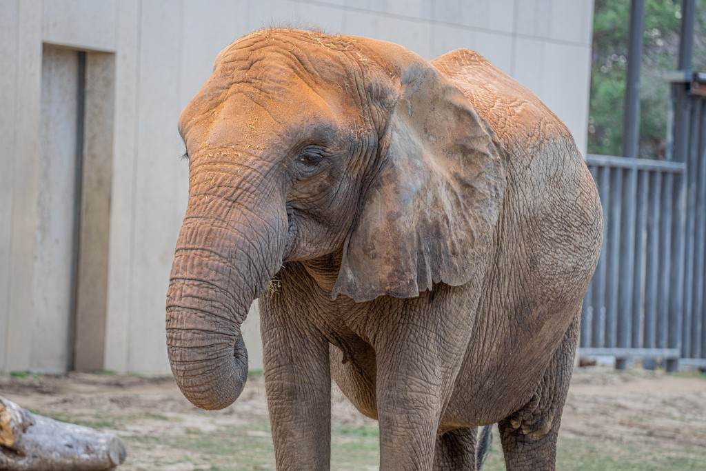 Belle The Elephant 2