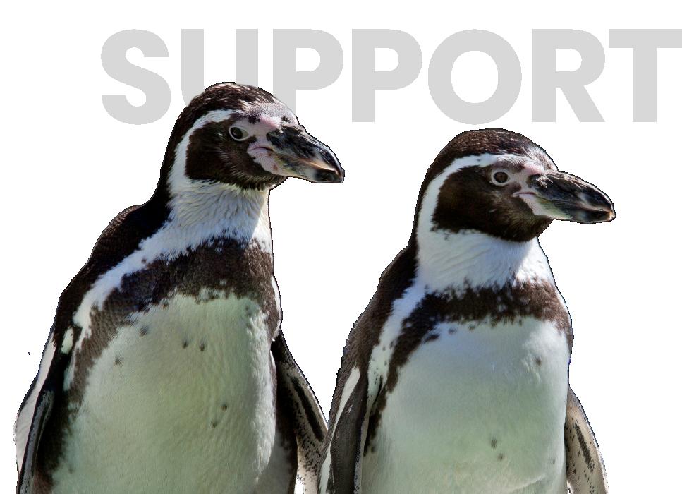 Support Penguins