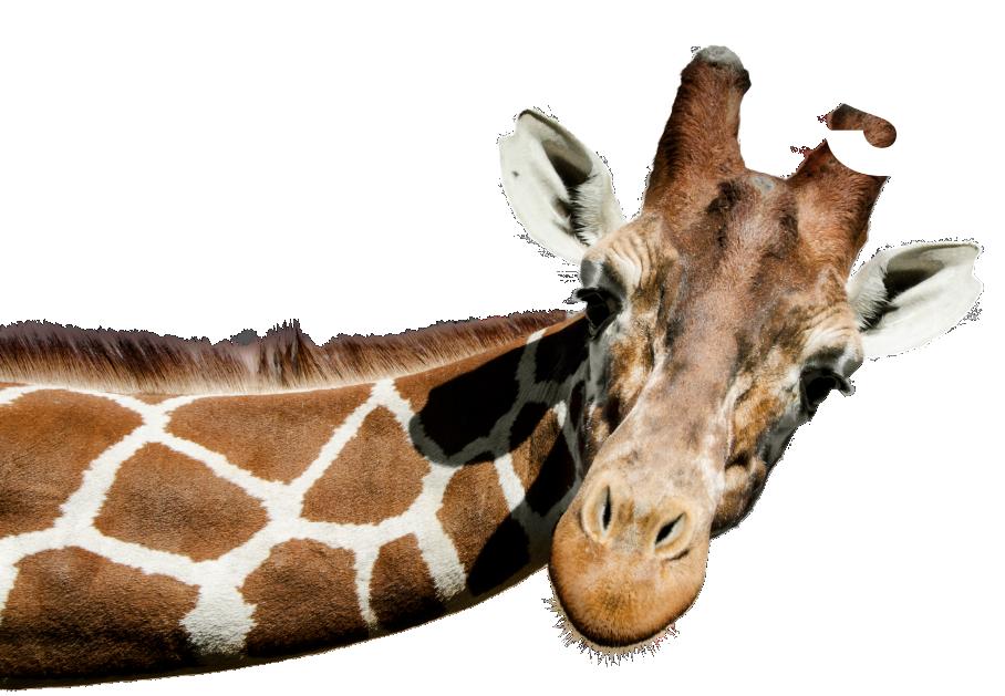 About Giraffe Overlay
