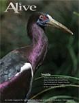 Alive Magazine: October 2013